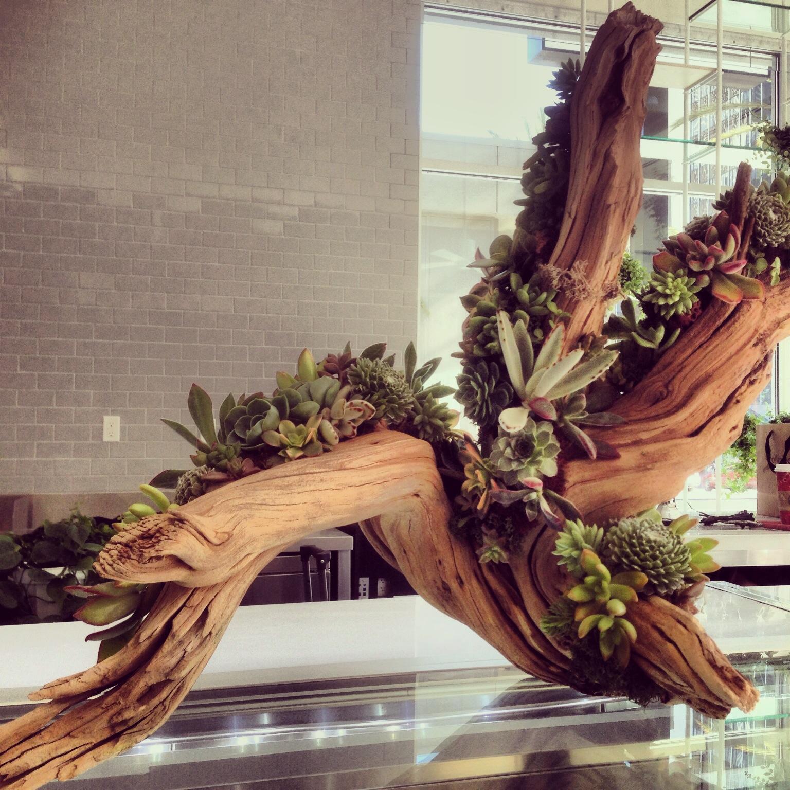 Close up of a driftwood and succulent arrangement by La Petite Gardenia.