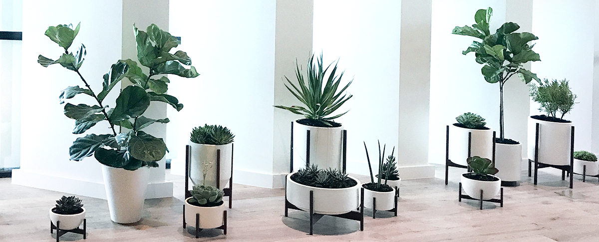 Plants in white planters that are set in black stands line the Everly Hotel in Los Angeles.
